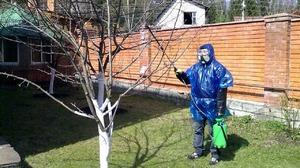 Правила ухода за деревьями в саду