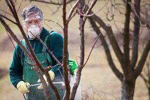 Как лечить деревья