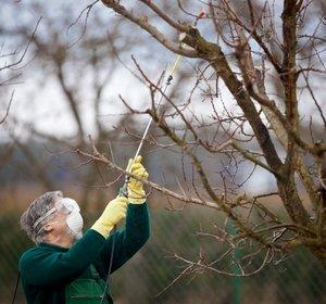 Чем опрыскать деревья в саду