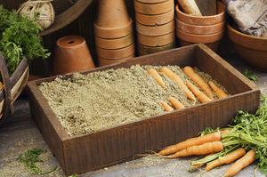 Как хранить морковь в квартире?