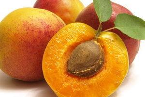 Выращиваем абрикос из косточки на даче, посадка и уход за молодыми деревьями