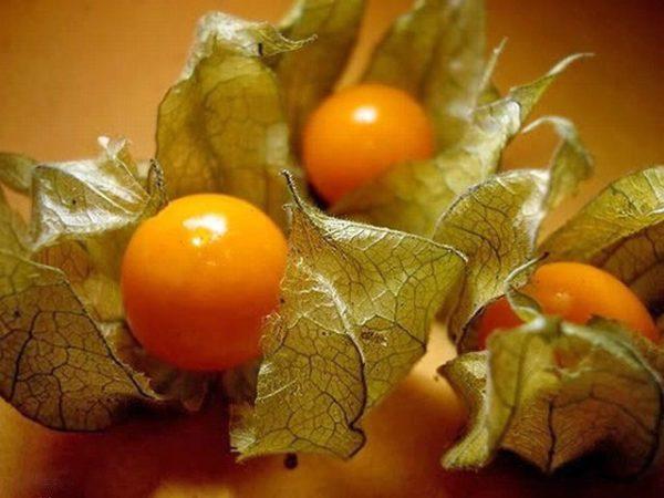 Физалис декоративный выращивание и уход