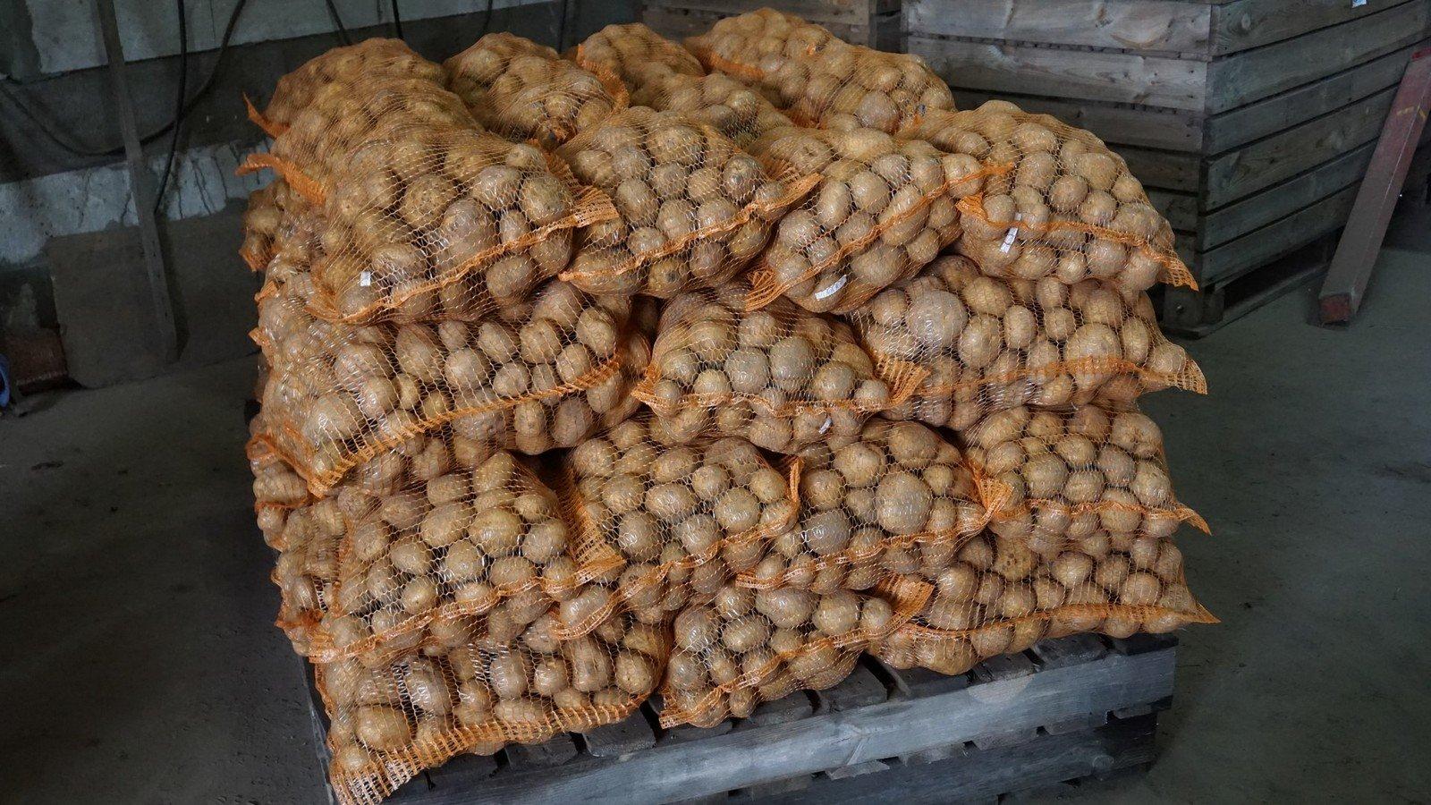 Особенности хранения и лежкость корнеплодов